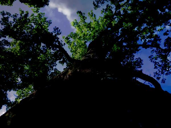 Режимы смешивания в фотошопе: линейное затемнение